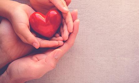 Srdce a cévy